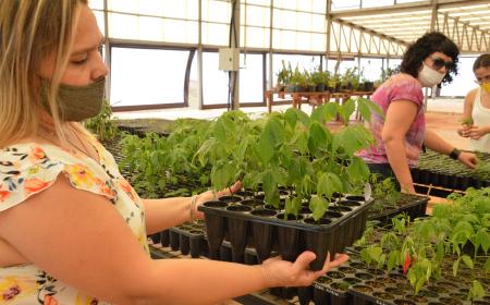Bioparque: Un proyecto que busca recrear la selva misionera en la ciudad